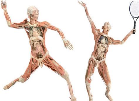 With The Bodies by Exposed Human Skin Goes Missing At Bodies Exhibition