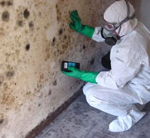 mold removal taking to prevent the spread of mold
