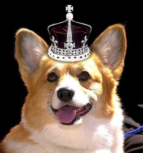 the queens corgis they terrorise footmen drive philip mad and knocked paul