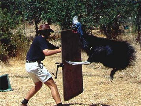 the cassowary another animal that will most likely rip