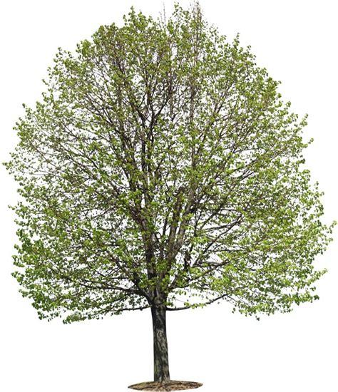 trees images p5038075c