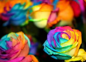 color flower color splash images colorful flowers wallpaper and
