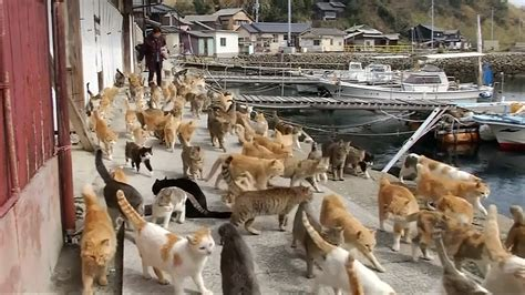 cat island japan cat island population 22 plus more than 120 felines