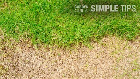 grass patches home depot patch and repair spread seed on problem spots today