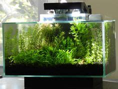 let me see some fluval spec v s page 3 fish and