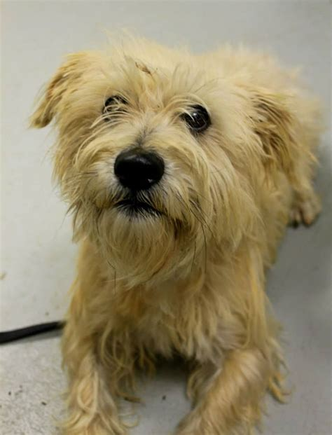 ohio puppy rescue 23 professor fluffy elyria ohio meet kennel 23 a petfinder adoptable