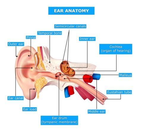 tumore orecchio interno sintomi schwannoma vestibolare o neuroma acustico stetoscopio