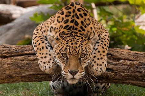 imagenes de animales exoticos popular attractions in ecuador tripadvisor
