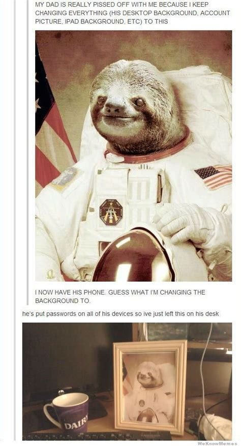 Astronaut Sloth Meme - 17 best images about sloths on pinterest the internet creepy sloth and laughing