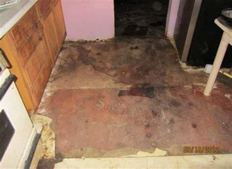 dog house ann arbor ypsilanti township officials condemn house extensively damaged by dog feces and urine