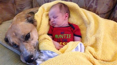 puppy sleeping with baby baby sleeping on