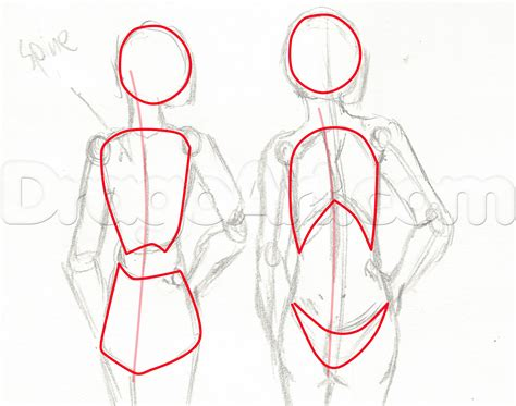 Drawing Anatomy by Anatomy Drawing Www Pixshark Images
