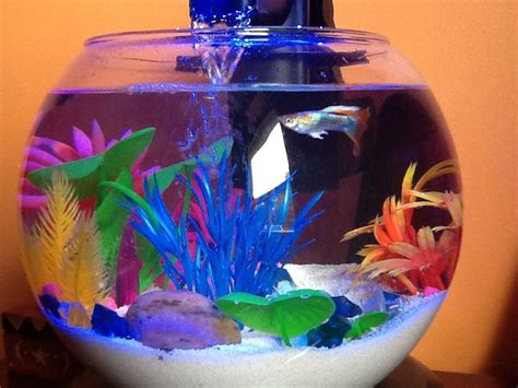Guppies Fish Tank Decorations by 17 Best Images About Fish On Goldfish