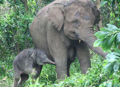 Water For Elephants Air Untuk Gajah By Gruen biologi flora fauna