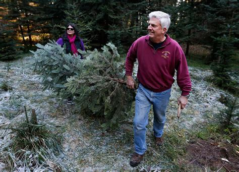 alan anderson christmas trees where to cut your own tree heraldnet