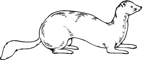 ferret coloring pages coloring pages to print