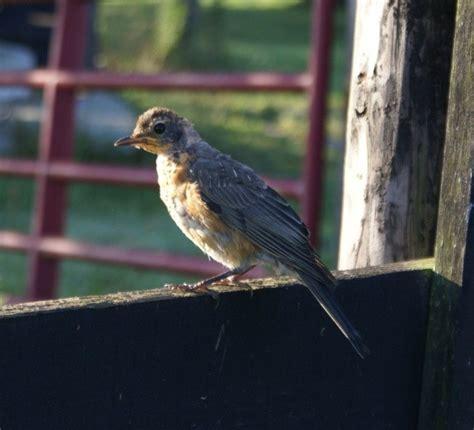 caring for a wild baby bird thriftyfun