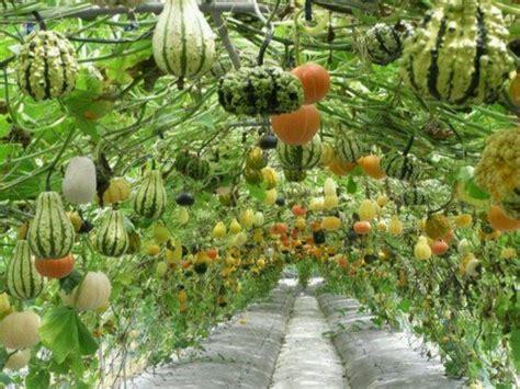 Gourd Trellis trellis for gourds things i