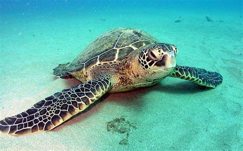 imagenes de tortugas blancas tortuga vertebrado o invertebrado averigualo todo