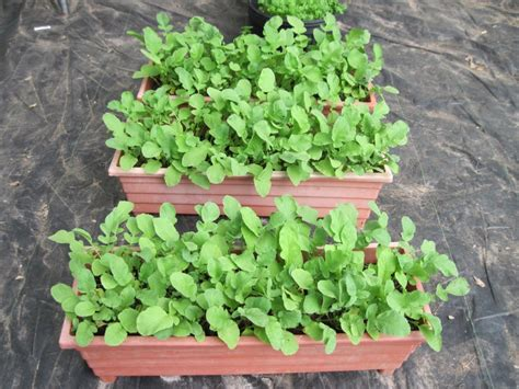 container garden seeds container gardening 15 best vegetables that grow well in a