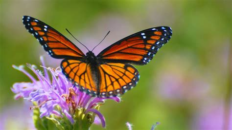 hd wallpapers zoom insects naturesmart phone  amazingbutterfly closeup wallpaper