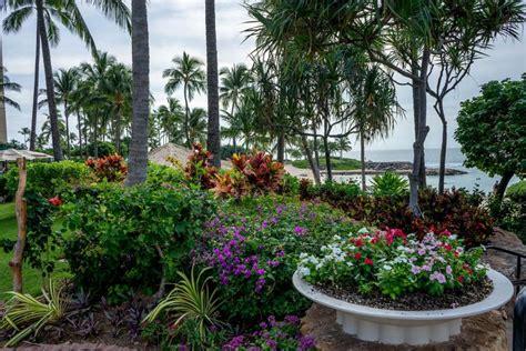 Tropical Flower Garden Growing Tropical Flowers Slideshow