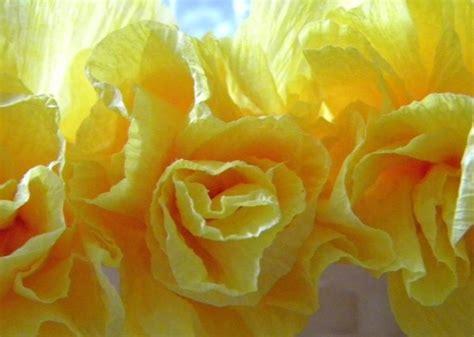 costruire fiori di carta crespa costruire fiori di carta crespa fiori di carta