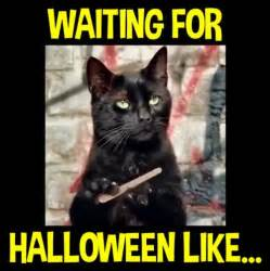 Funny Halloween Meme - 33 best halloween memes images on pinterest halloween