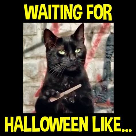 Funny Halloween Memes - 33 best halloween memes images on pinterest ha ha funny stuff and halloween cartoons