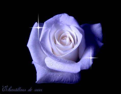 theme rose et noir montage rose blanche et bleu sur fond noir by catken on