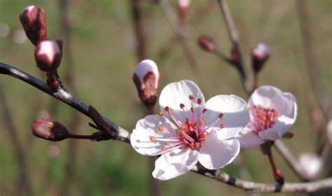 plum blossom tree new year you ll need these 10 new year decorations for an