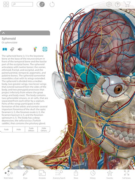 Human Anatomy compare human anatomy atlas and premium visible