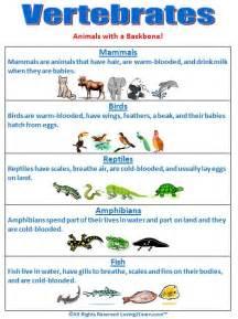 the 25 best vertebrates ideas on pinterest vertebrates