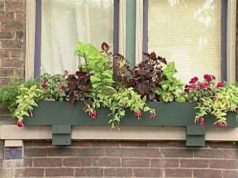 window box ideas for shade planting window boxes for shade diy