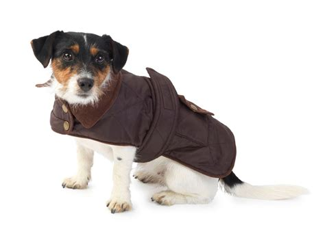waterproof dog house brown quilted waterproof dog coat by house of paws waterproof dog coats