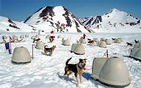 sledding alaska alaska sledding authentic luxury travel