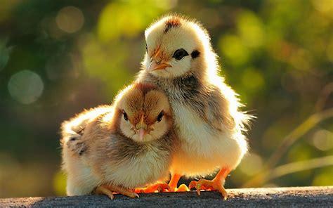 fotos animales tiernas fondos de pantalla de animales tiernos medioambiente y