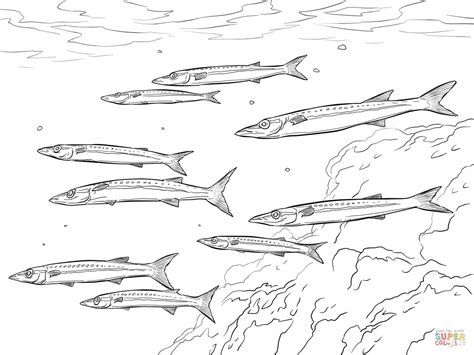 barracuda fish coloring page yellowtail barracuda shoal coloring page free printable