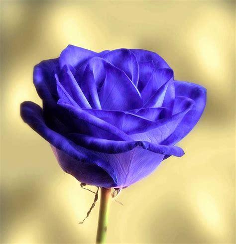 imagenes para perfil flores imagenes hermosas para enamorar apexwallpapers com
