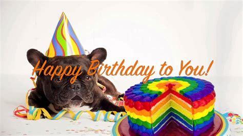 tony s dogs 10 happy birthday pictures