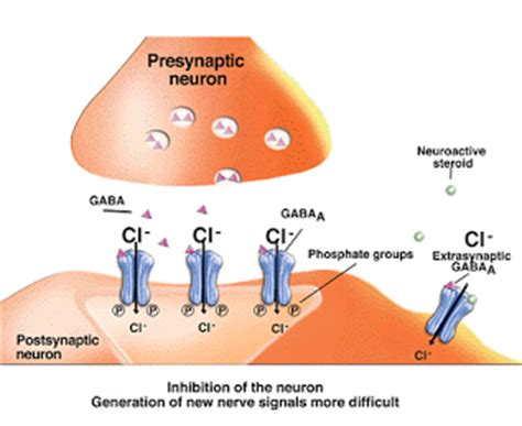 Can Detox Affect My Gaba by Neurotransmitters Affected By And The