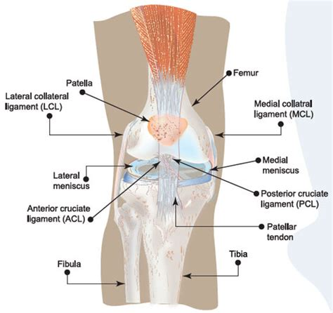 torn acl home treatment torn acl knee injury symptoms causes treatment prevention