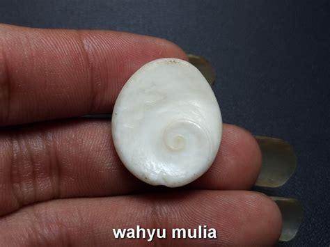 Fosil Kerang Putih batu fosil kerang putih kol buntet asli kode 723 wahyu