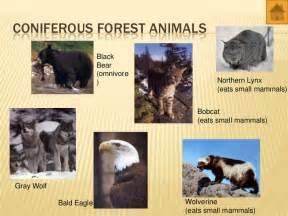 Tropical Rainforest Animals And Plants Adaptations - world biomes animals and plants