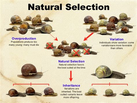 evolution natural selection 2011
