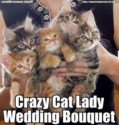 Funny Cat Lady Memes - 17 best images about funny for bridezillas groomzillas