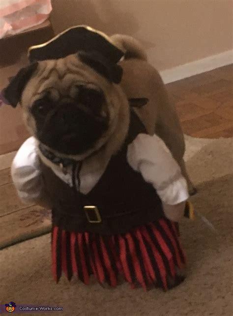 pug pirate costume pug pirate costume photo 2 2