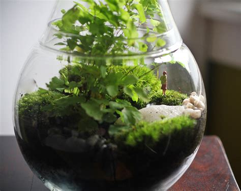 diy make your own tiny terrarium garden that ll stay green all winter long terrarium scene
