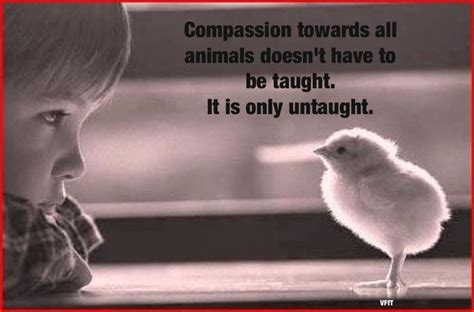 we all a book for compassionate vegans and vegetarians books compassionate quotes meme s vavavoom vegan organic