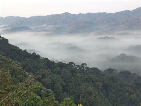 nyungwe forest gorillatimes nyungwe national park africa geographic travel